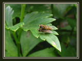 Catches by wimida, Photography->Insects/Spiders gallery