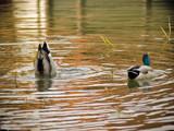 Bottoms Up! by DJP, Photography->Birds gallery