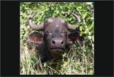Peeking Through by SusanVenter, Photography->Animals gallery