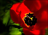 In it's own light by LynEve, photography->flowers gallery