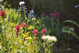 Wildflowers by TrailGypsy, Photography->Flowers gallery