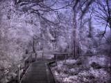 A stroll down memory lane by biffobear, photography->landscape gallery