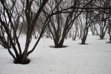 A Bleak and Somber Season by Silvanus, photography->landscape gallery