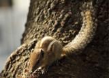 Squirrel by prashanth, photography->animals gallery