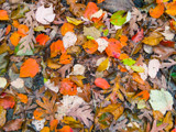 Fall Collage by Pistos, photography->nature gallery