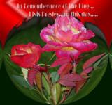 Elvis Rememberance by verenabloo, Photography->Flowers gallery