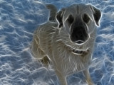 Ghost Dog by psychofreak, Photography->Manipulation gallery