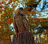Chainsaw Owl by biffobear, photography->sculpture gallery