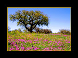 SPRING HAS SPRUNG by pikman, Photography->Landscape gallery