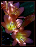 Sunkissed by SusanVenter, Photography->Flowers gallery