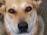 Bridgett's Beautiful Face by coffeesucker, photography->pets gallery