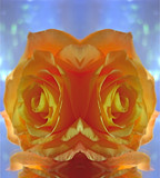 Golden Rose Mirror by ccmerino, Photography->Manipulation gallery