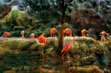Flamingo Bay by casechaser, photography->manipulation gallery