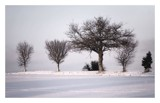 Happy Christmas by JQ, Photography->Landscape gallery
