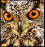 Whoooo! by Dunstickin, photography->birds gallery
