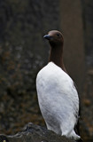 Guardian by biffobear, photography->birds gallery