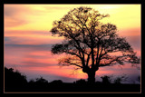 Tree at sunset by JQ, Photography->Sunset/Rise gallery