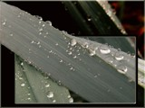 drops by kodo34, Photography->Macro gallery