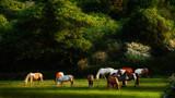 SUNLIGHT & SHADOWS by LANJOCKEY, photography->animals gallery