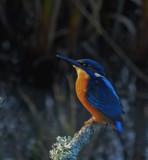 Watchful Eyes by biffobear, photography->birds gallery