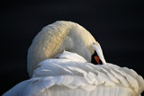 Extreme Preening #2 by braces, Photography->Birds gallery