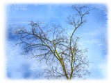 Winter Tree by Ed1958, Photography->Manipulation gallery