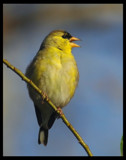 Hootenany by garrettparkinson, Photography->Birds gallery