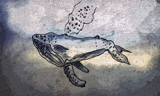 Humpback Whale by bfrank, illustrations gallery