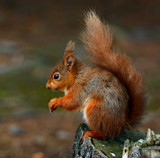 Red by biffobear, photography->animals gallery