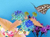 A Flutterby Day by bfrank, Photography->Manipulation gallery
