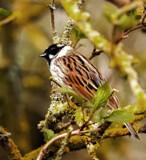 Male by biffobear, photography->birds gallery