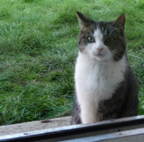 May I come in... by Gabbels, photography->pets gallery