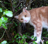 I can climb trees! by LynEve, photography->pets gallery