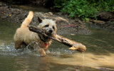 Simba's day at the creek by Paul_Gerritsen, photography->pets gallery