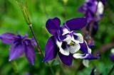 Lovely Purple by Stevenn120, photography->flowers gallery