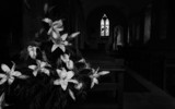 Lilies for Remembrance by coram9, photography->places of worship gallery