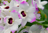 Another from the Orchid Show by trixxie17, photography->flowers gallery