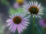 Flower Power by ladyred, Photography->Flowers gallery
