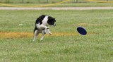 Dog Disc Event #2 by tigger3, photography->action or motion gallery