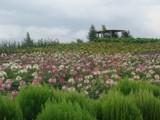 Hokkaido Mix by MarciaTheFaerie, Photography->Flowers gallery