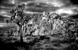 Joshua Tree Rock Band by snapshooter87, contests->b/w challenge gallery