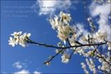 Spring Blossoms by LynEve, photography->flowers gallery