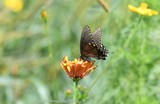 From Ruby's Garden Of Plenty #8 by tigger3, photography->butterflies gallery