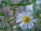 Flower by bdayfun, photography->manipulation gallery