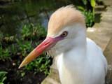 Hey Bub, Ya Know A Good Barber by Hottrockin, Photography->Birds gallery
