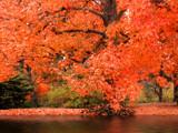 La Brea Autumn by jojomercury, Photography->Landscape gallery