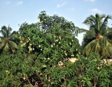 backyard scene-2 by sahadk, photography->nature gallery