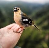 bird in hand by Lin_O, photography->birds gallery