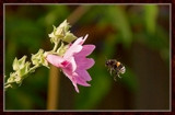 From My Wife's Garden, Approach 2 by corngrowth, photography->insects/spiders gallery