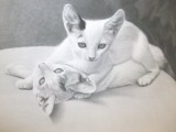 Kittens Sketched by mesmerized, illustrations->traditional gallery
